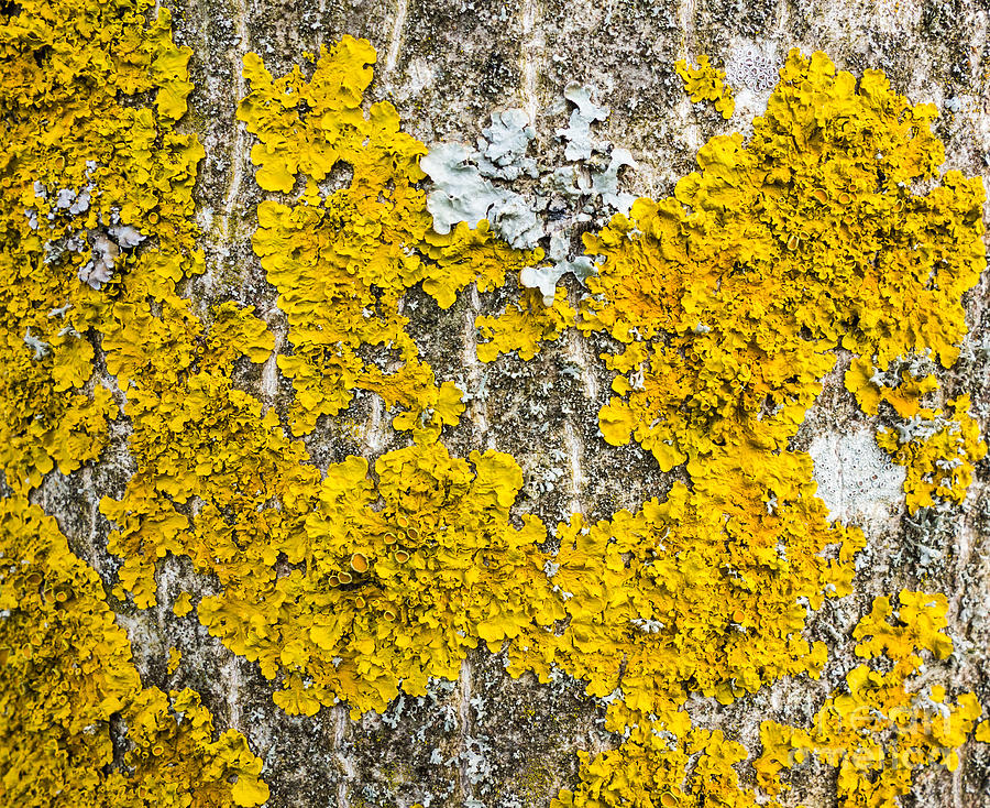 Image Gallery Lichen Growing